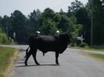 I call bull!