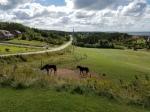 horses-colt