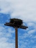 osprey-nest
